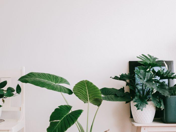 Sfeer creatie in huis